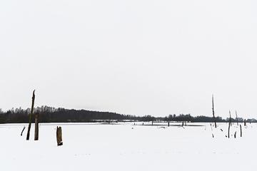 arbre-neige-tumbnail