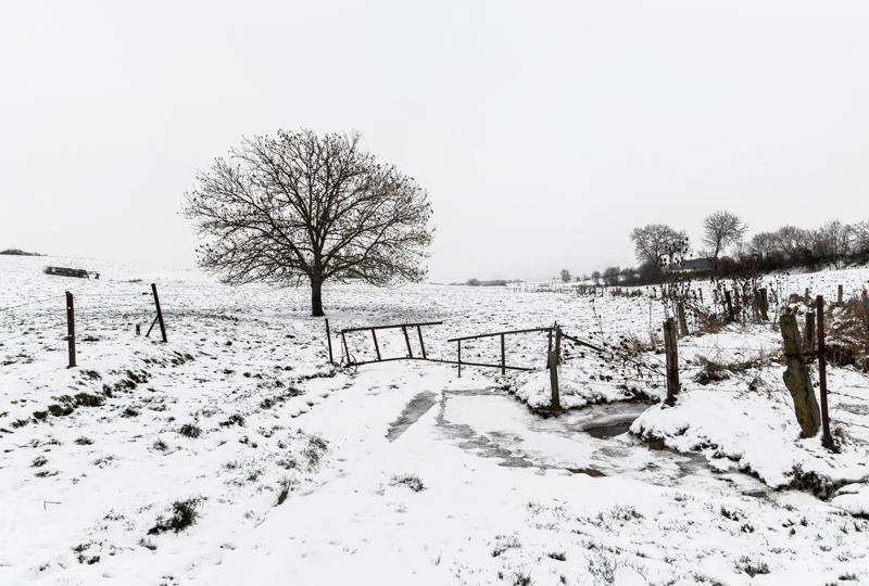 arbre-neige1-web