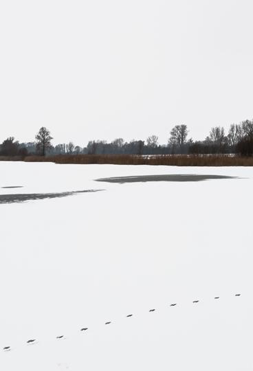 arbre-neige10-web