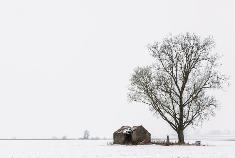 arbre-neige13-web