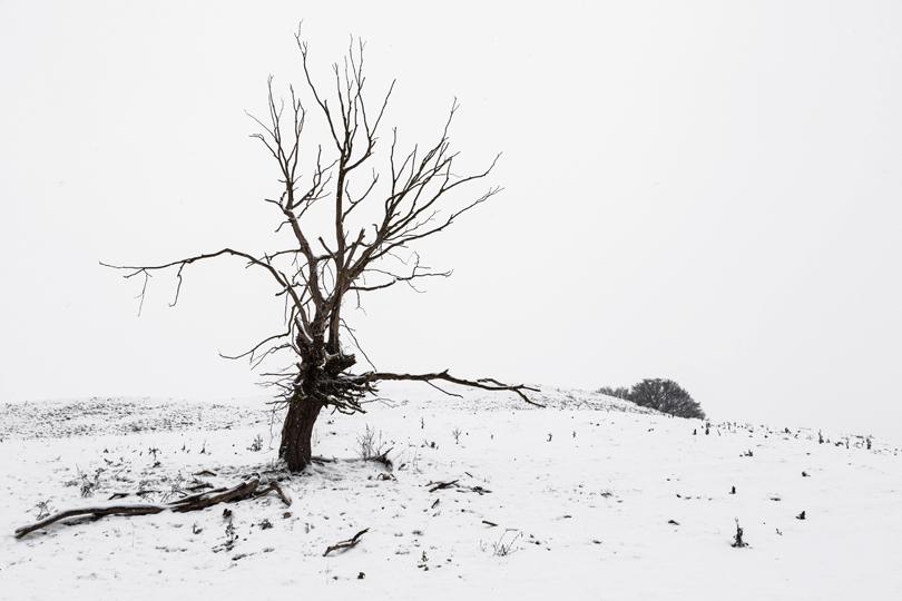 arbre-neige2-web