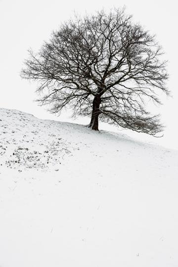 arbre-neige21-web