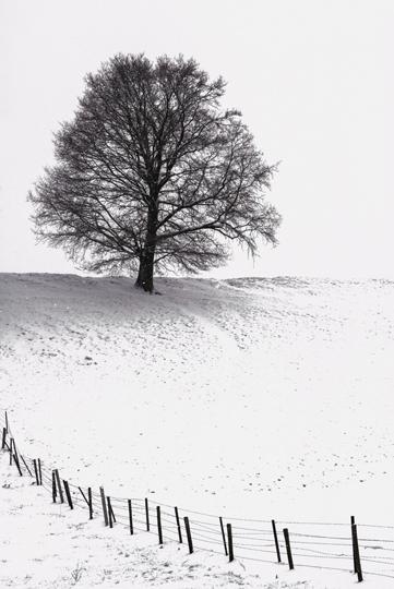 arbre-neige22-web