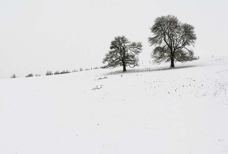 arbre-neige23-web