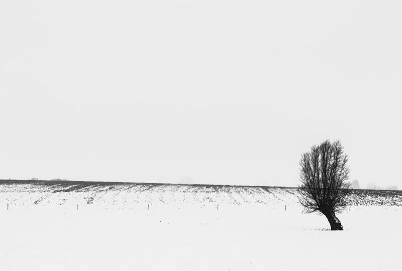 arbre-neige24-web