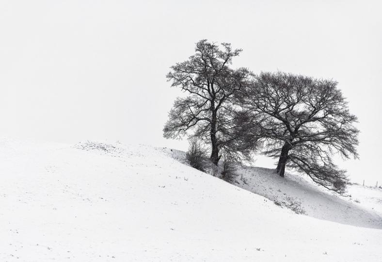 arbre-neige4-web