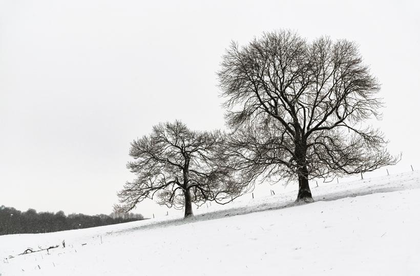 arbre-neige5-web
