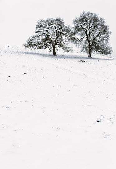 arbre-neige6-web