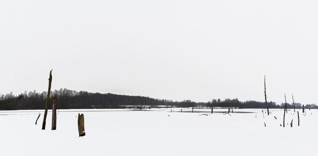 arbre-neige8-web