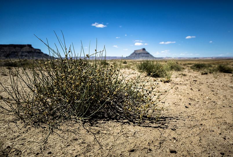 1-desert