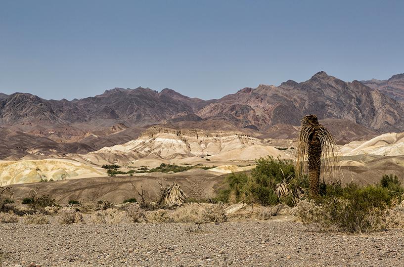 12-desert