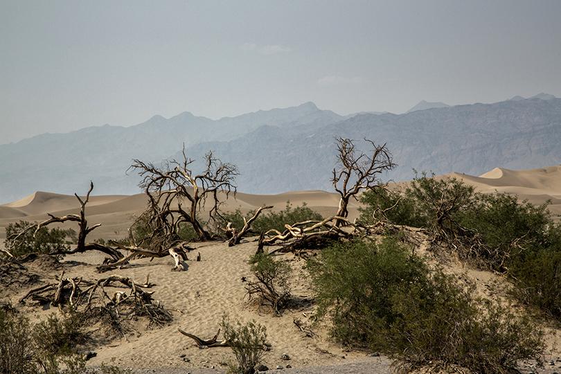 5-desert