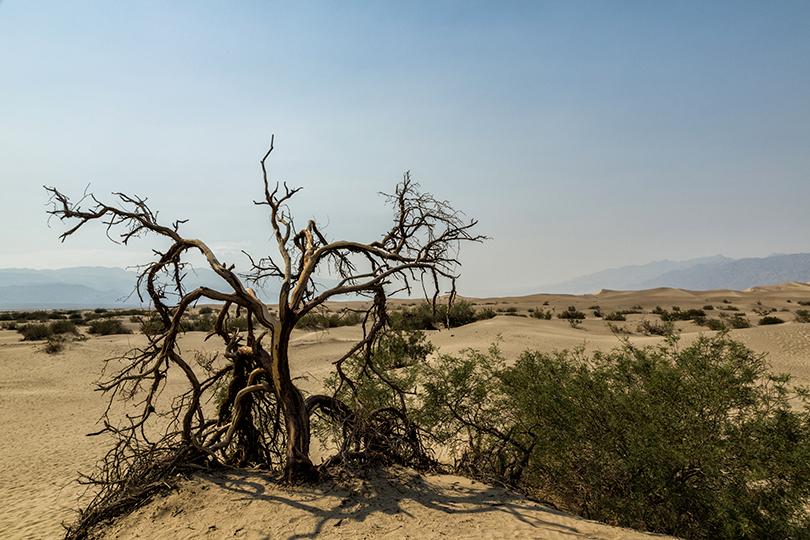 6-desert