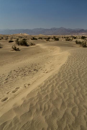 8-desert