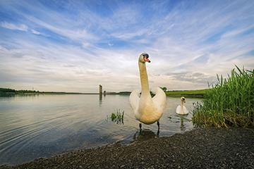 Cédric Brion Clavicule-pics lac de l'ea d'heure (2)